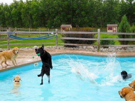 Вечеринка у бассейна в Lucky Puppy (10 фото + видео)