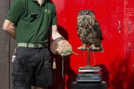 В Лондонском зоопарке провели ежегодный осмотр животных (18 фото)