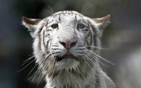 Интересные фотографии с животными (21 шт)