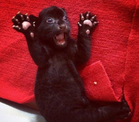 В китайском зоопарке Ханчжоу родился тигрёнок без полос (8 фото)