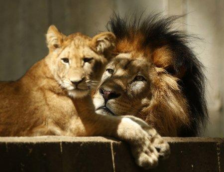 Мир животных в фотографиях (16 фото)