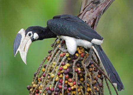 Самые красивые экзотические птицы (12 фото)