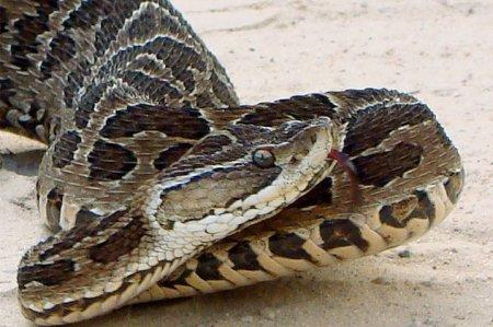 Топ-10: Самые редкие змеи в мире