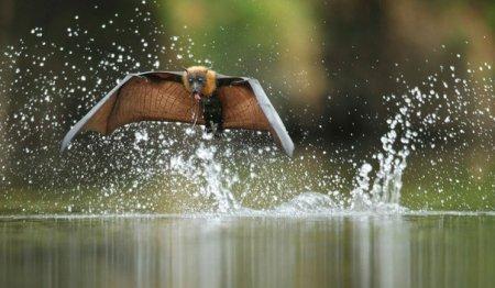 Летучие лисицы (6 фото)