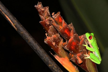 Топ-10 лягушек с невероятными сверхспособностями