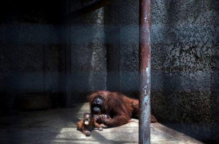 Мир животных в фотографиях (15 шт)