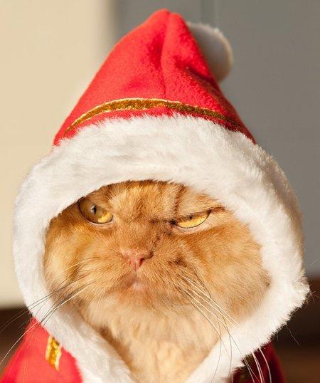 Хмурый котейка Гарфи (20 фото)