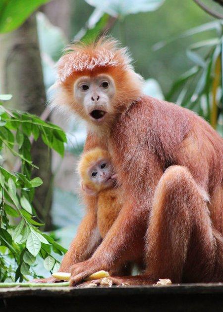 Самые редкие в мире малыши в зоопарке Сингапура (18 фото)