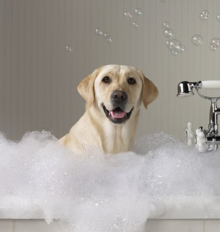 Топ-10 самых возмутительных поступков владельцев домашних животных