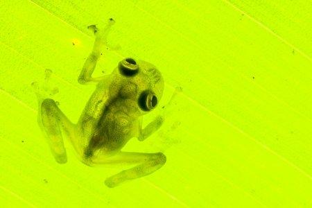 Редкие виды земноводных, которые были заново открыты (12 фото)