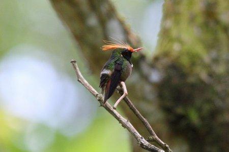 Самые красивые колибри на нашей планете (15 фото)