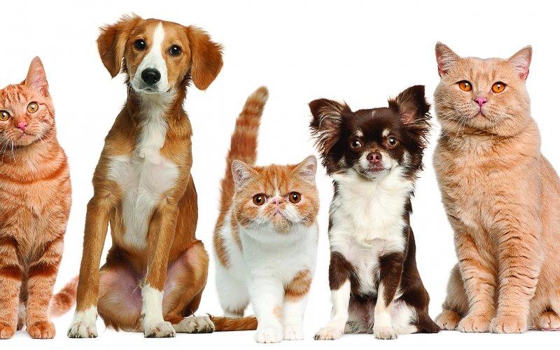 фотки кошек и собак
