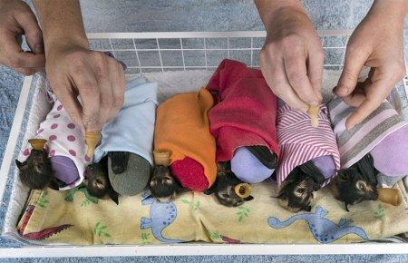 Больница-приют для летучих мышей в Австралии (14 фото)