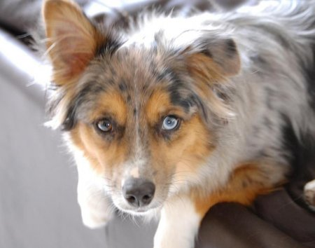 Животные с глазами разного цвета (21 фото)