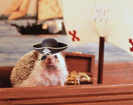 Приключения ёжика Хамфри (15 фото)