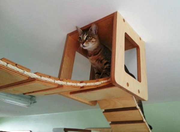Топ-25 оригинальных предметов мебели, которые понравятся вашей кошке