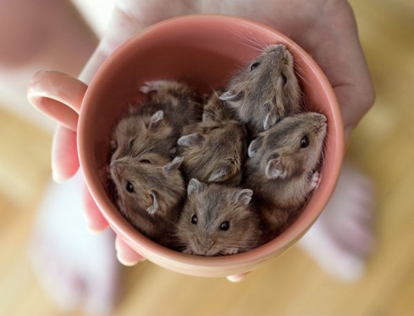 Очаровательные животные в чашках (35 фото)