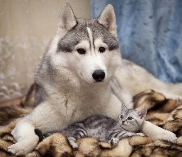 Дружба кошек и собак (16 фото)