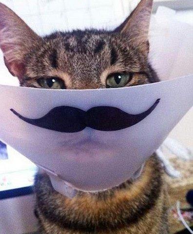 Забавные коты с усами (10 фото)