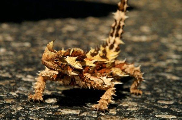 9 самых прожорливых животных планеты