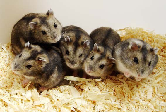 10 самых милых животных планеты