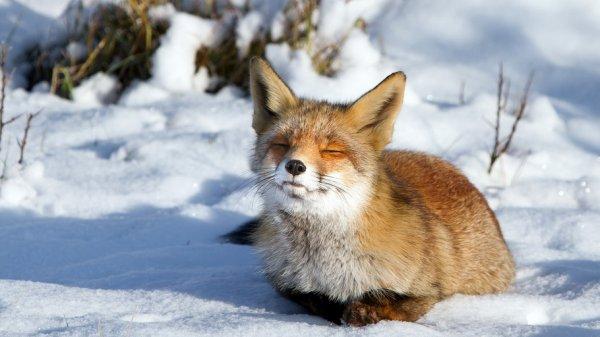 Животные в снегу (19 фото)