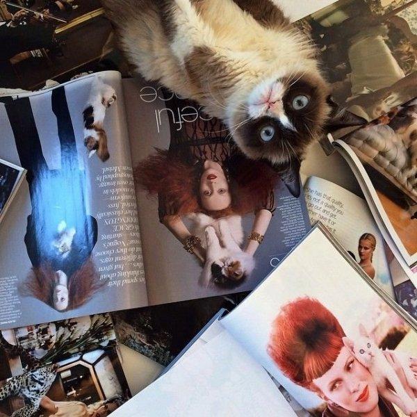 Недовольная кошка - Grumpy Cat (13 фото)