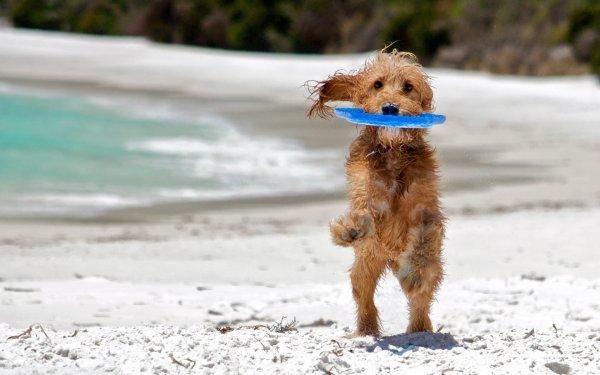 Фризби для собак (10 фото)
