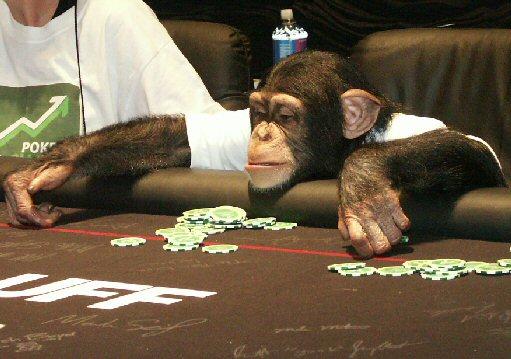 Ничего необычного, просто обезьяны играют в покер и игровые автоматы онлайн