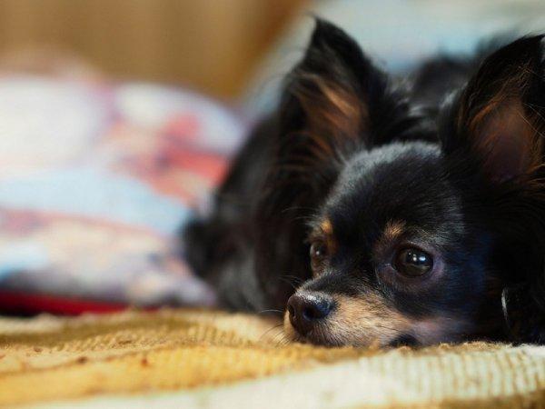 Как отучить собаку от кровати (10 фото)