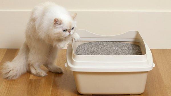 Кошачий туалет - правильный уход за кошкой