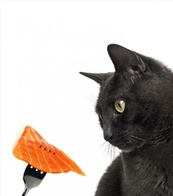 Как научить кошку не воровать еду со стола
