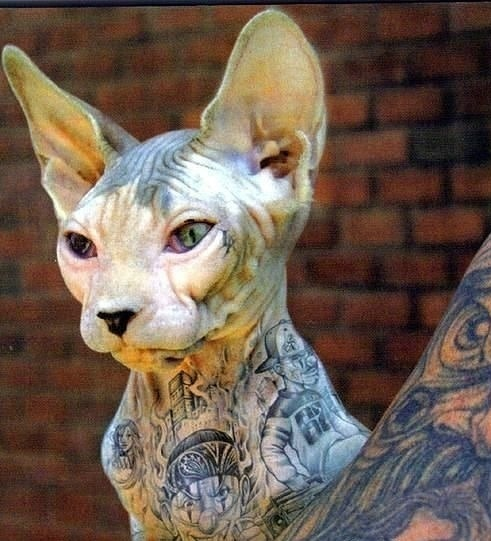 Татуировки для животных: последний писк моды или сумасшествие