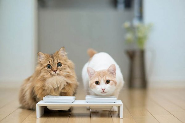 Как выбрать корм для кошек