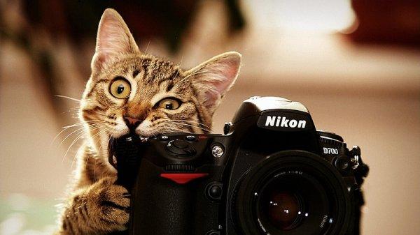 Как правильно фотографировать животных