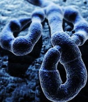 Обезьяны оказались на грани вымирания из-за страшного вируса