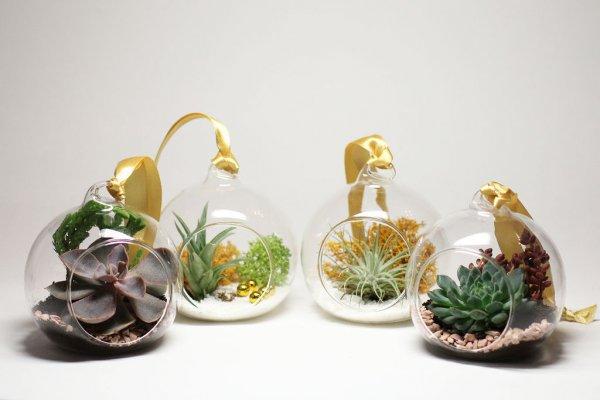 Животные и комнатные растения теперь могут жить вместе