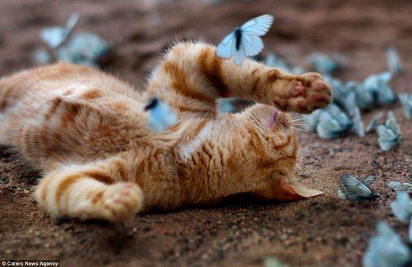 Игры с домашней кошкой