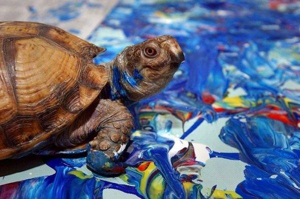 Самые знаменитые животные-художники и стоимость их картин