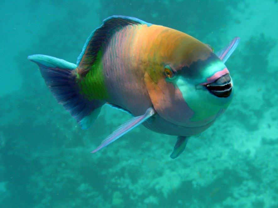 Гуппи  аквариумные рыбки содержание размножение мальки