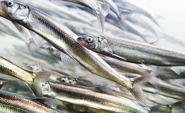 Необычные и смешные названия рыб