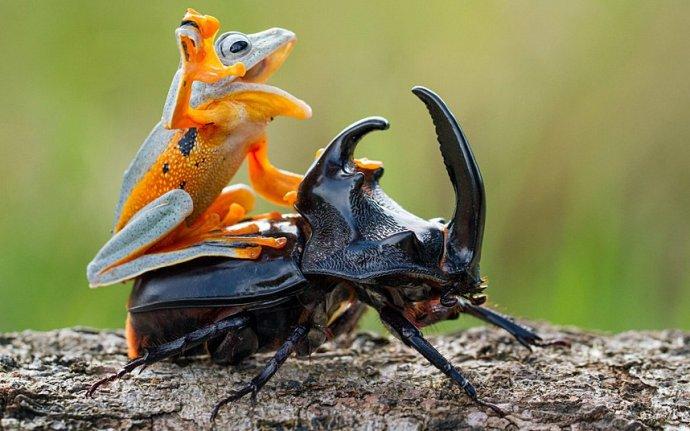 Животные-наездники (подборка фото)