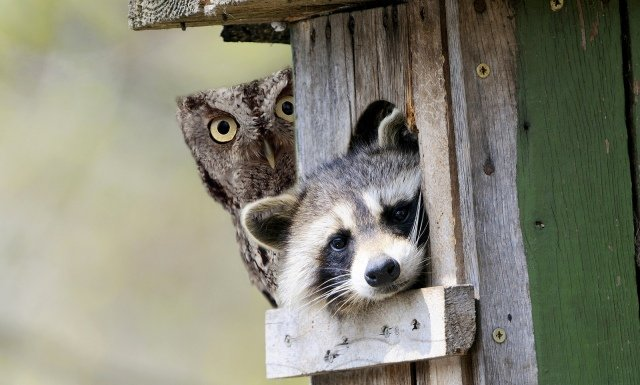 Забавные фотобомбы с животными