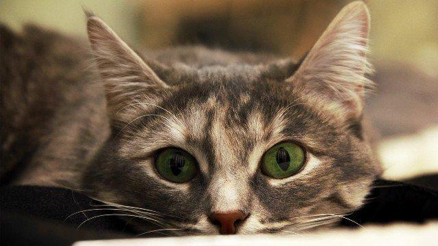 25 удивительных фактов о кошках