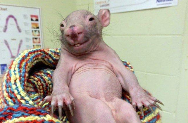 10 животных, которых сложно узнать без шерсти