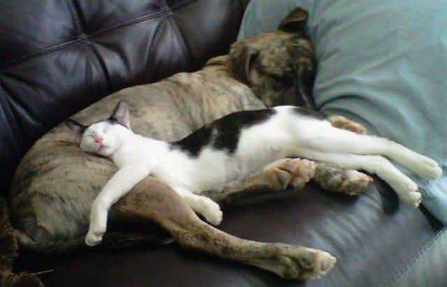 Забавные коты, которым все равно где и как спать (25 фото)