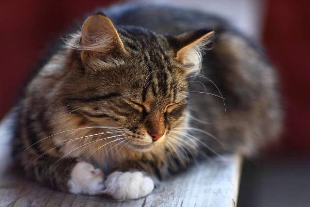О чем говорит поза кошки во время сна
