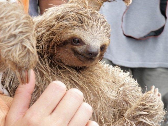 Самые счастливые животные (15 фото)