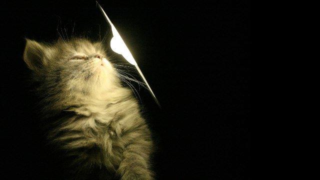 Как искусственное освещение влияет на жизнь животных