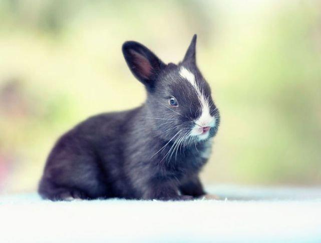 Как меняется кролик в течение первого месяца жизни (16 фото)